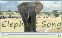 Click to view Elephant Song